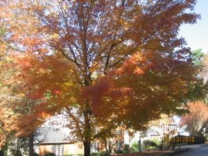 Glorious neighborhood Fall color
