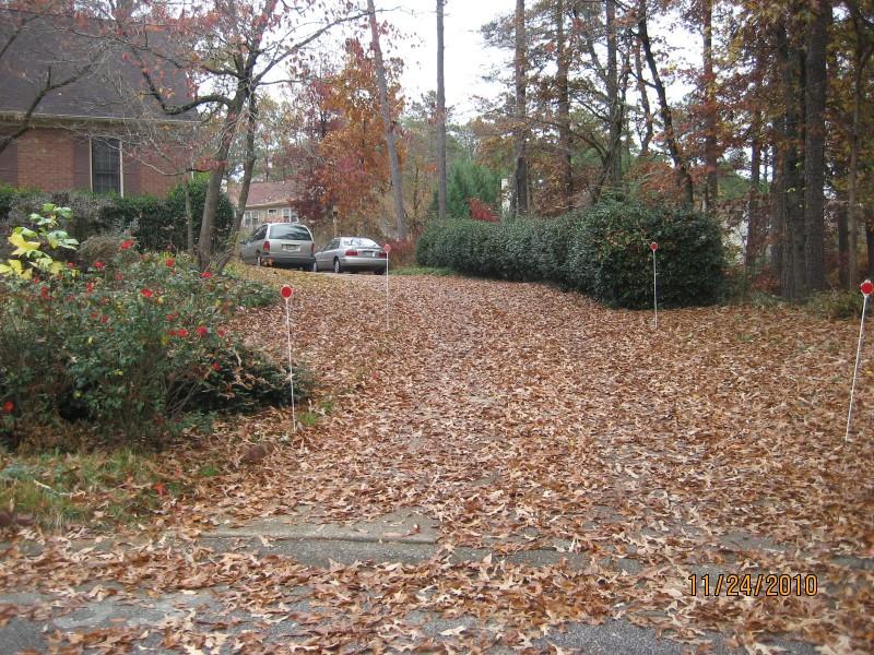 낙엽, 낙엽, 낙엽...
