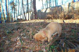 뒷뜰에서 보물을 찾는 3개월이 된 토비, 2005년 봄