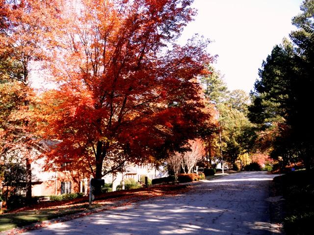 Fall Colors, 2011