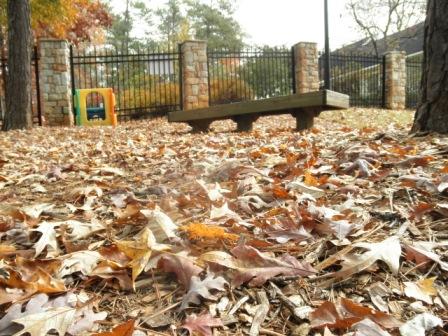 Autumn leaves near swimming pool