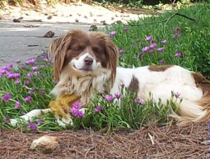 Jackie, a handsome dog