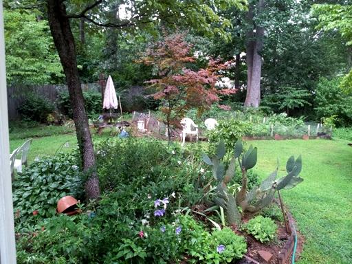 먼 곳에 보이는 Yonsook's 'victory' edible garden