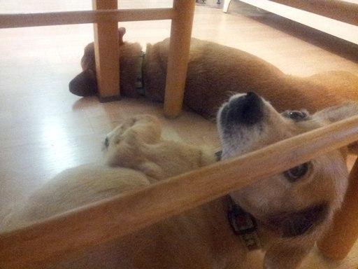 guest인 Ozzie와 나란히 누워 있는 Tobey.. 모습이 너무 좋다
